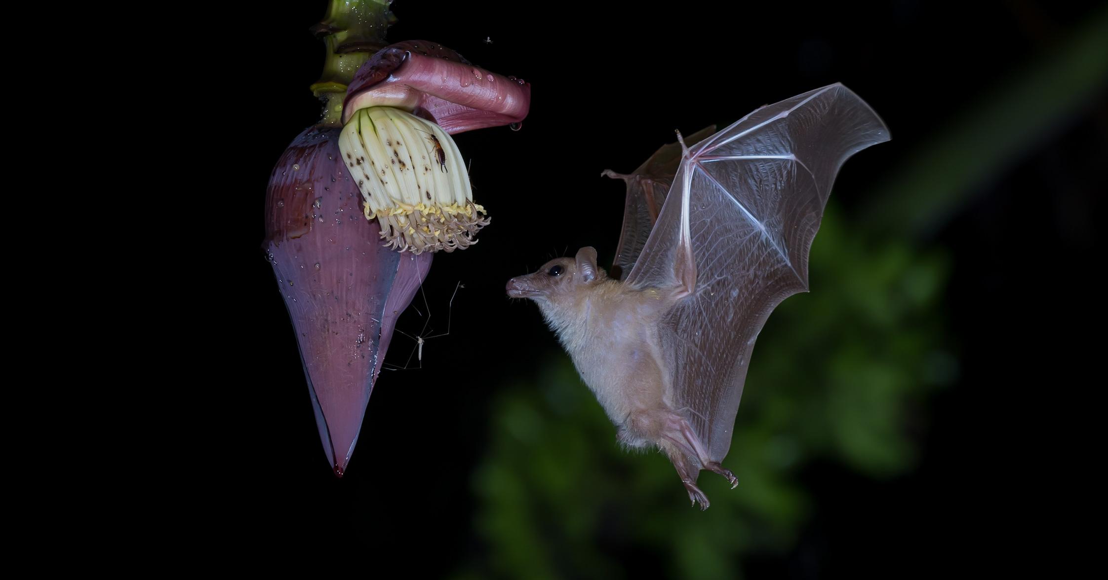 Duniart Hero Bat